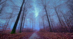 Full-HD-Forest-Image
