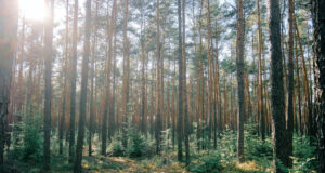 Green-Trees-During-Daytime-Pic
