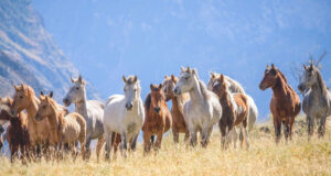 Group-of-Horses-Pic-HD