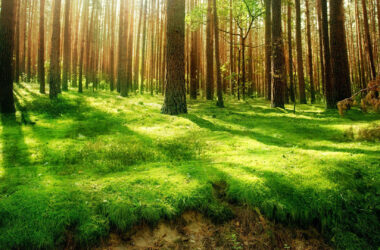 HD-Image-of-Forest