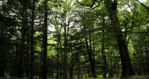 HD-Picture-of-Forest