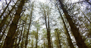 High-Definition-Picture-of-Forest