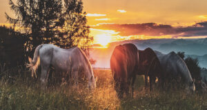 Horses-Standing-on-Grass-Field-HD-Pic