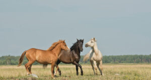Horses-on-Green-Ground-HD-Pic