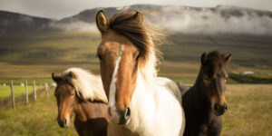 Horses on Green Ground Pic