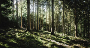 Image-of-Forest-in-HD