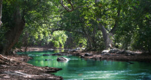 River-Between-Green-Leaf-Trees-Pic