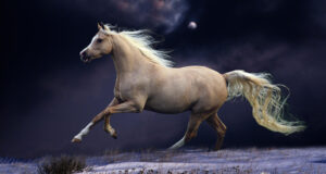 Running-Horse-HD-Pic