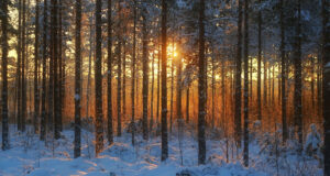 Snow-in-Forest-Full-HD-Pic