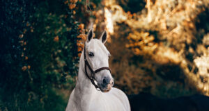White-Horse-Standing-Near-Plant-HD-Pic