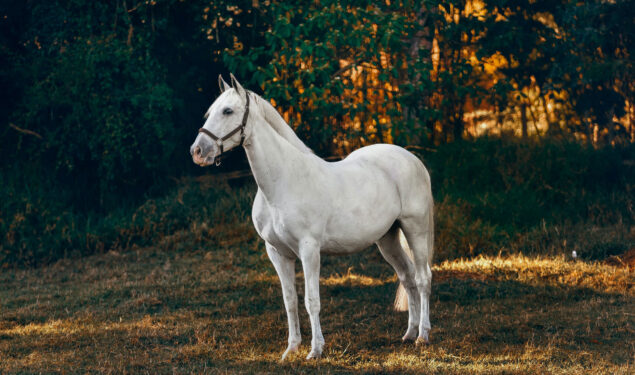 White Horse Standing on Grass Field Pic