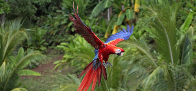 Colorful-Parrot-Flying-Image-HD