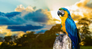 Colorful-Parrot-Full-HD-Image