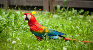 Colorful-Parrot-HD-Photo