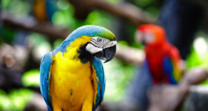 Colorful-Parrot-Image-HD