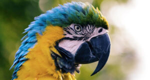 Colorful-Parrot-Pic