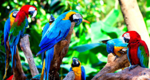 Colorful-Parrots-Full-HD-Photo