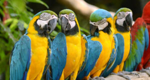 Colorful-Parrots-Image-in-HD