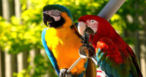 Colorful-Parrots-Pic-HD
