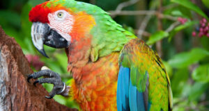 Full-HD-Image-of-Colorful-Parrot