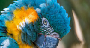 Full-HD-Pic-of-Colorful-Parrot