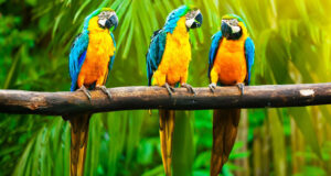 Full-HD-Pic-of-Colorful-Parrots