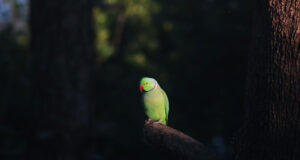Green-Parrot-on-Tree-Branch-HD-Pic