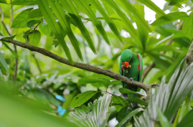 Green-Parrot-on-Tree-Branch-Pic-HD