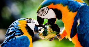 Image-of-Colorful-Parrots-in-HD