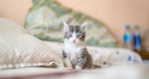 Kitten-on-White-Textile-HD-Pic