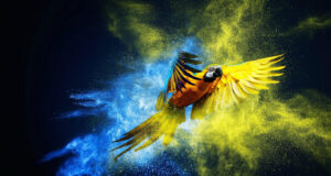 Pic-of-Colorful-Parrot-in-HD