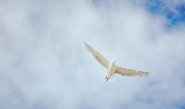 Flying White Dove Image HD