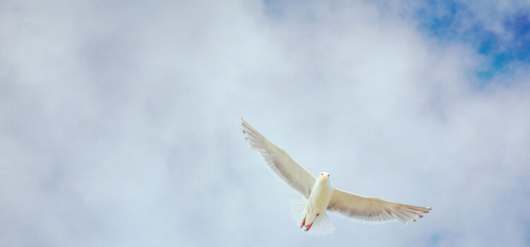 Flying-White-Dove-Image-HD