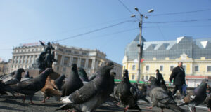 Group-of-Pigeon-Image-HD