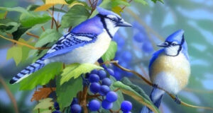 HD-Image-of-Blue-Jay