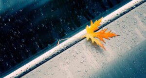 Raindrops-on-Leaf-HD-Wallpaper
