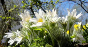Anemone-Image-in-HD