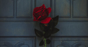 Red-Rose-Pic-HD