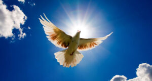White-Pigeon-Flying-in-Sky-Image