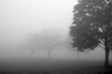 Fog-in-Field-Black-and-White-HD-Pic