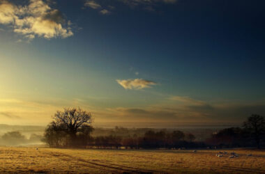 Fog-in-Field-Image-HD