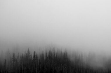 Fog-in-Forest-HD-Image