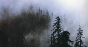 Fog-in-Forest-HD-Pic