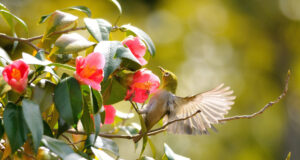 Hummingbird-Pic-HD