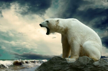 Polar-Bear-Near-Shore-HD-Image