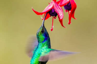 Flying-Hummingbird-Near-Flowers-Image-HD