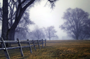 Fog-in-Field-High-Definition-Pic