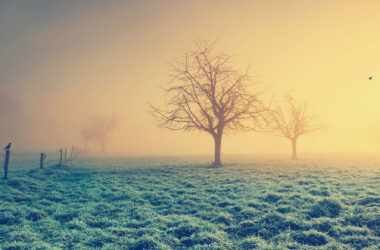 Fog-in-Field-High-Definition-Wallpaper