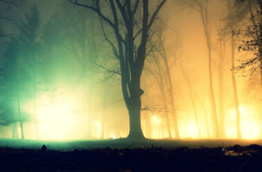 Fog-in-Forest-High-Definition-Picture