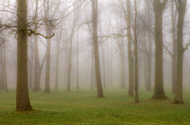 Fog-in-Forest-Image-HD